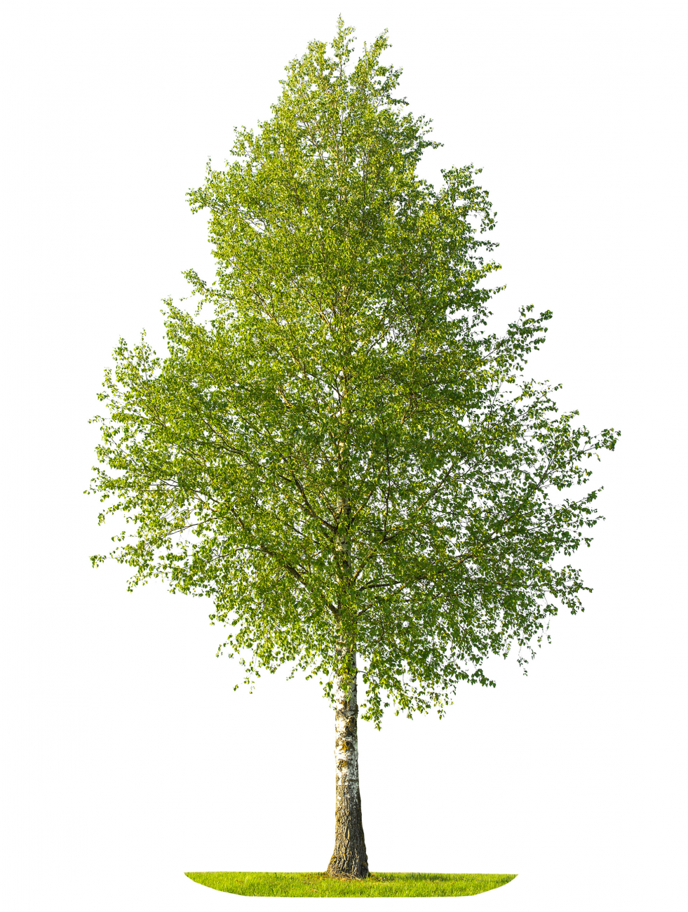 Product image of Tree and Shrub planter